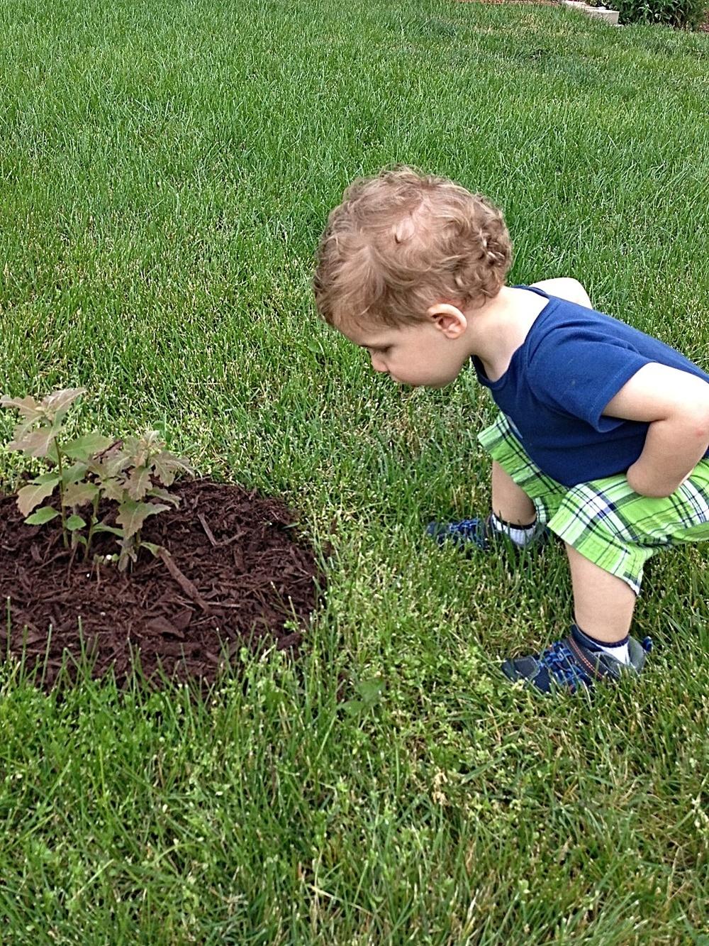Dylan Inspects the Oak Tree.jpg