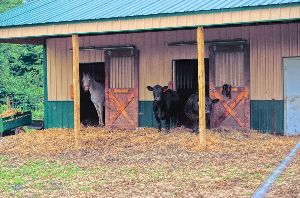 Cardinal Point Farm 71.jpg