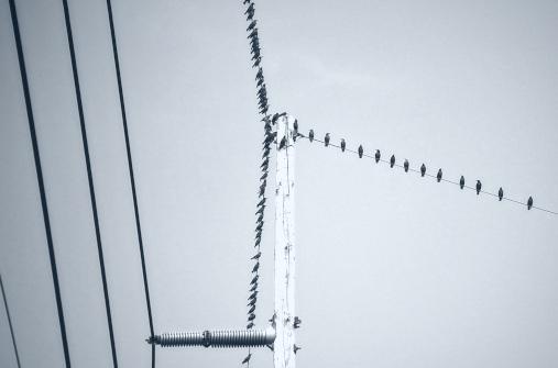 Cold Birds.jpg