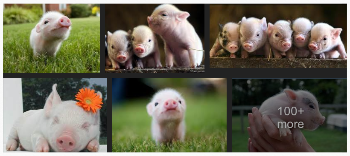 Sorry, couldn't decide, they're all showing different angles and are just too darn cute! Thanks, Google Images. :-)