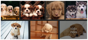 Puppies! Yay Google Images. :-)