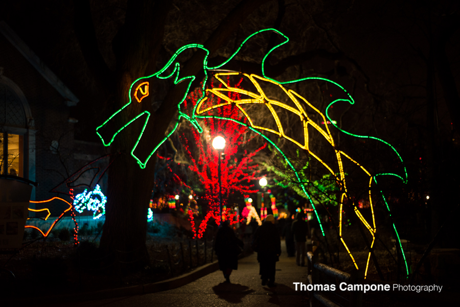 Lincoln Park Zoo Lights-2.jpg