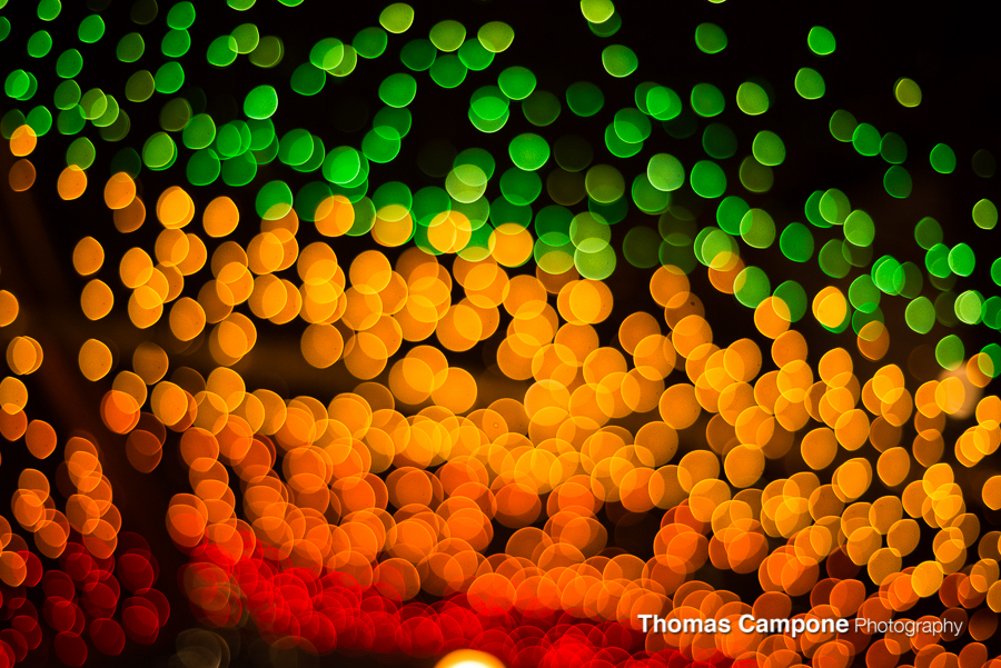 Lincoln Park Zoo Lights-5.jpg