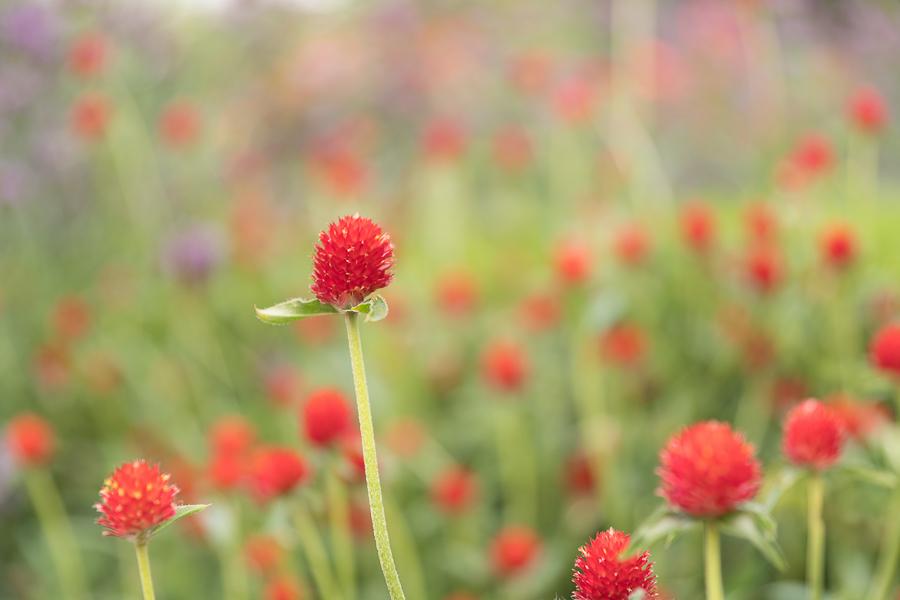 Chicago-Botanic-Garde-2.jpg