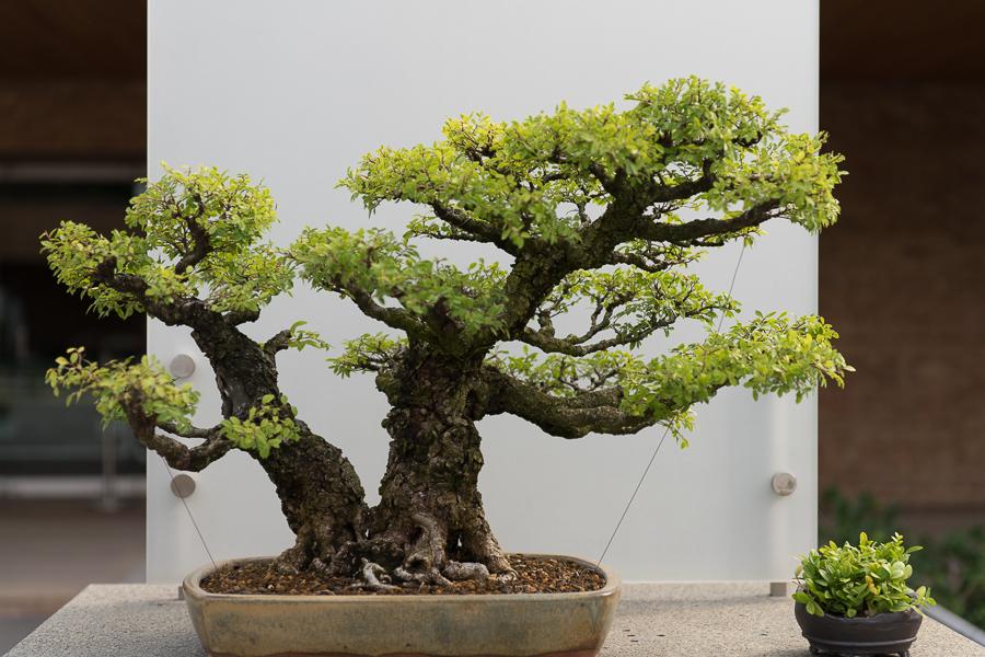 Chicago-Botanic-Garde-10.jpg