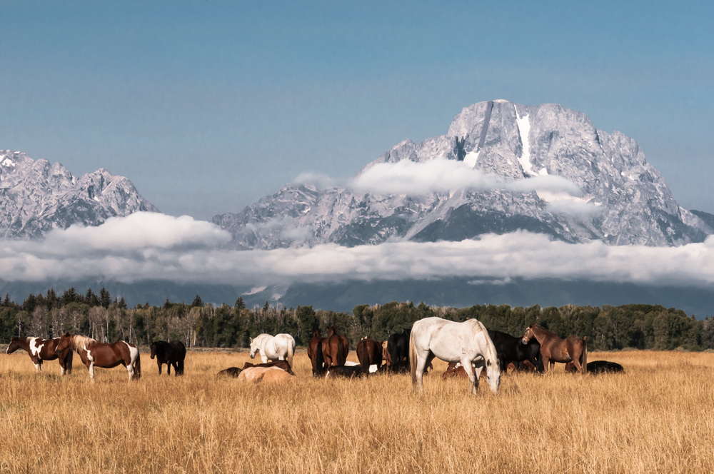 Grazing at Teton NP