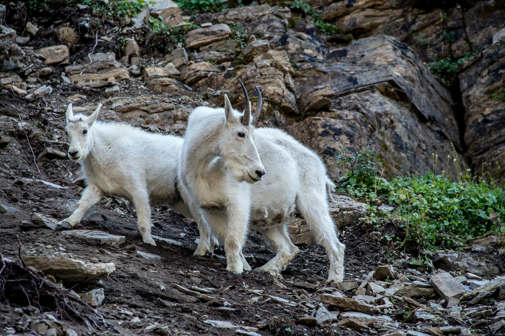 Mom & Kid, Glacier NP