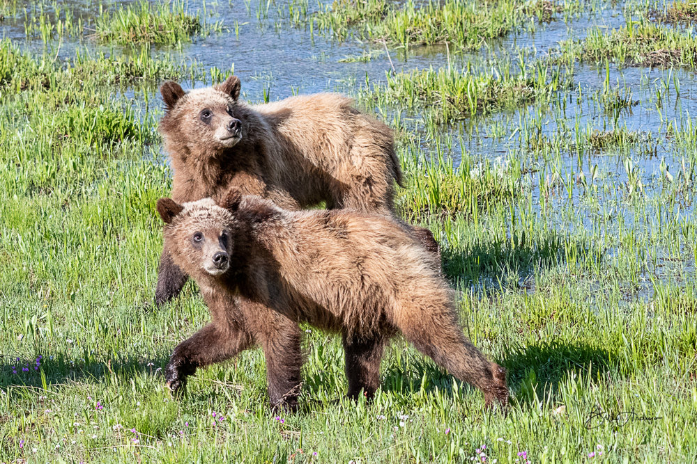 399's two cubs
