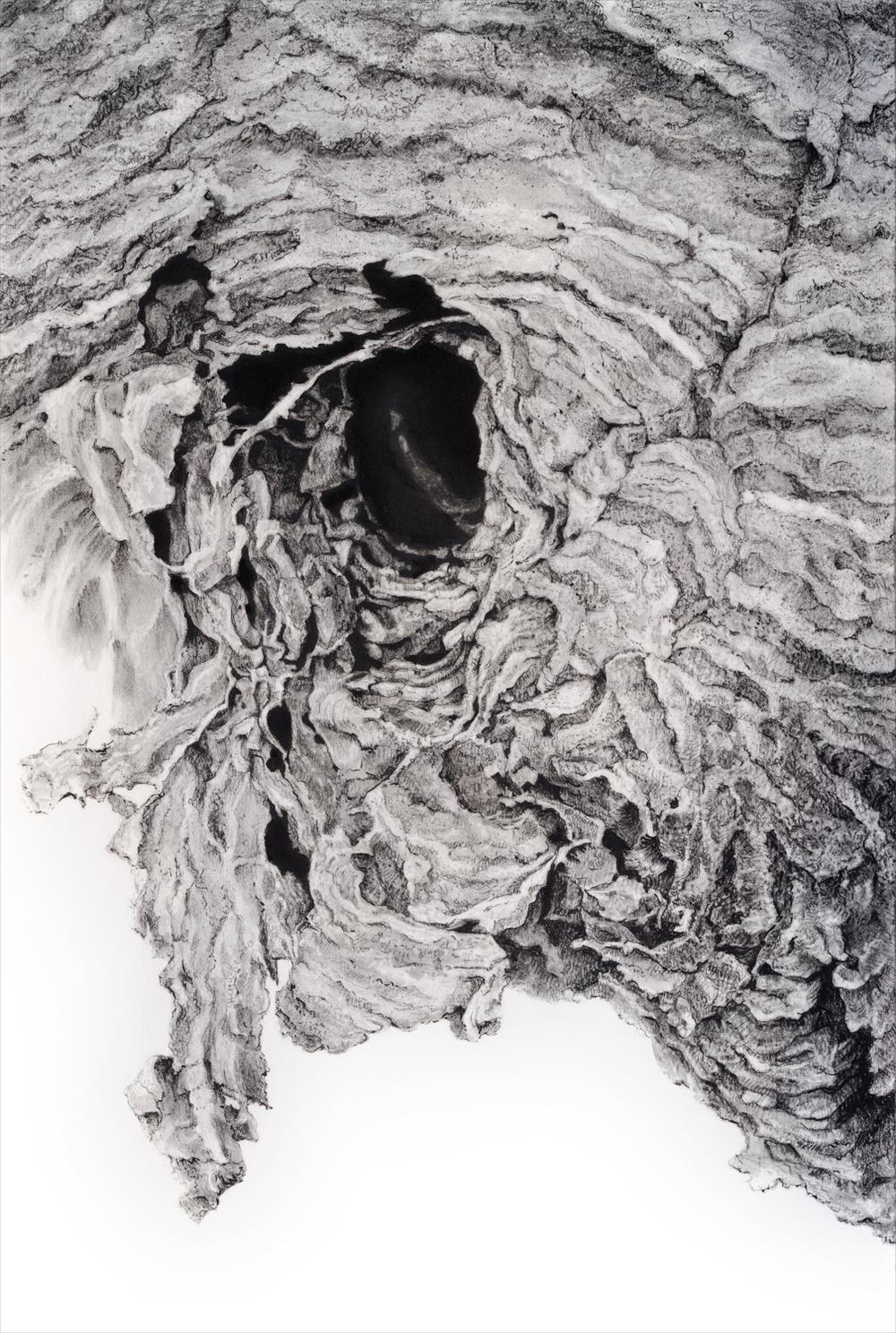 """Portal I, 2013    18 3/4"""" x 22 3/4"""", charcoal on paper"""
