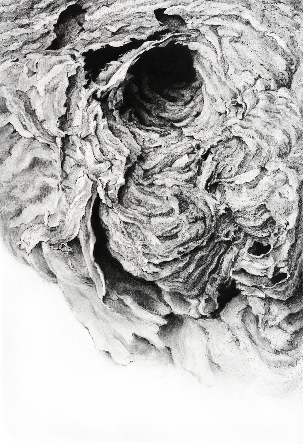 """Portal II, 2013    18 3/4"""" x 22 3/4"""", charcoal on paper"""