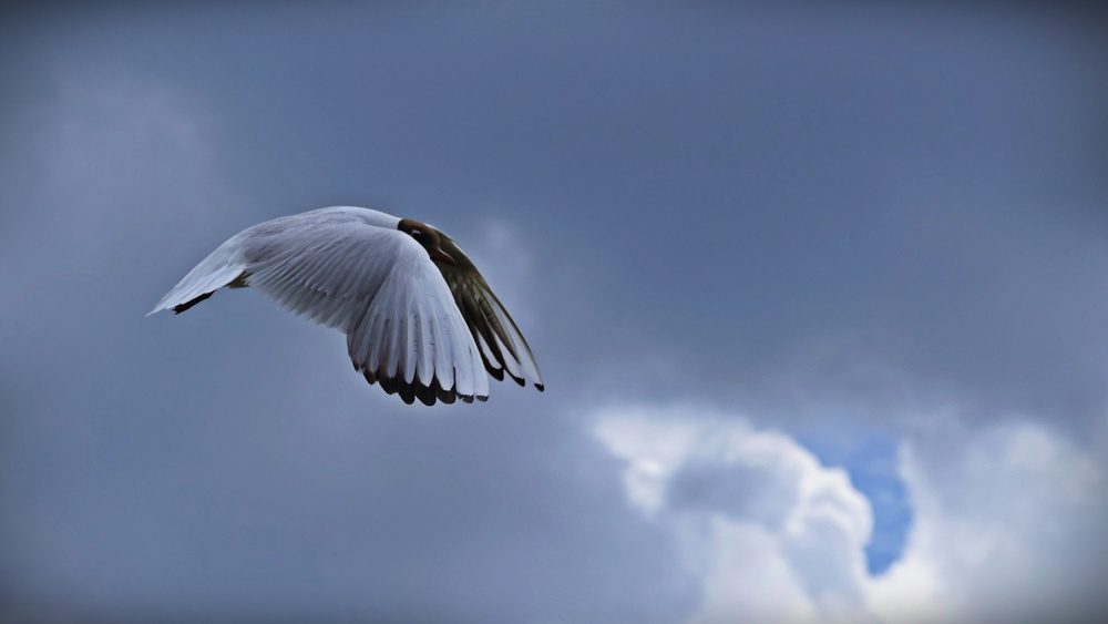 09 Seagull.JPG