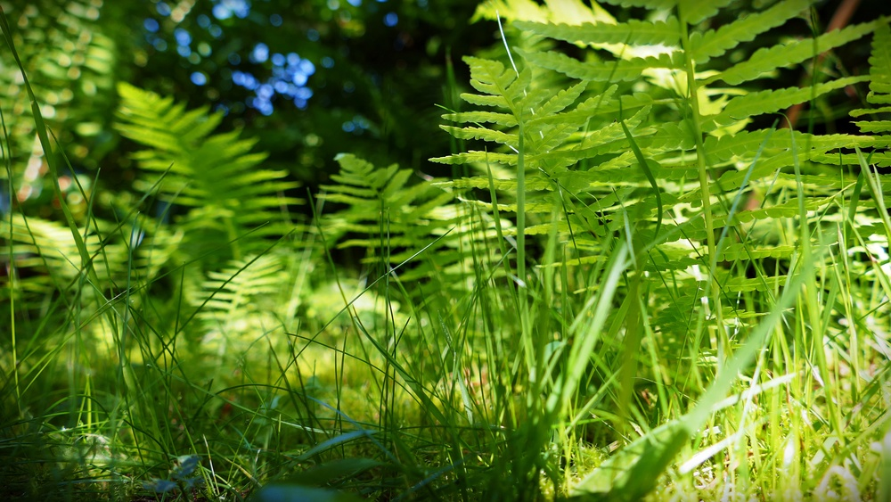 10 In the Ferns.JPG