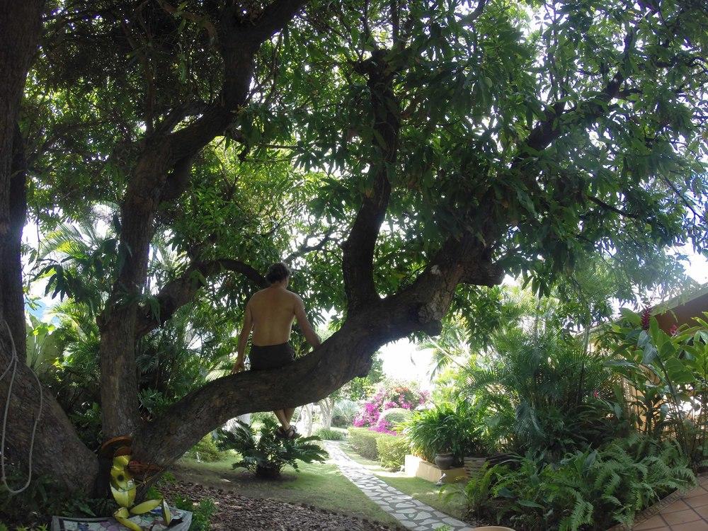 Tarzan of St Kitts