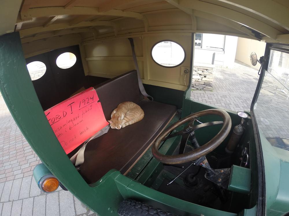 Asleep at the wheel.JPG