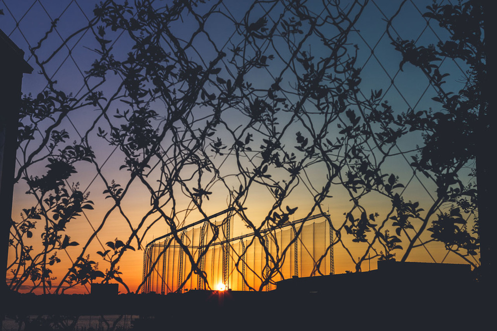 Fences, Vines, and Sunsets