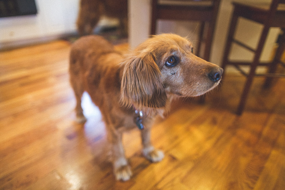 Cute Dog Alert