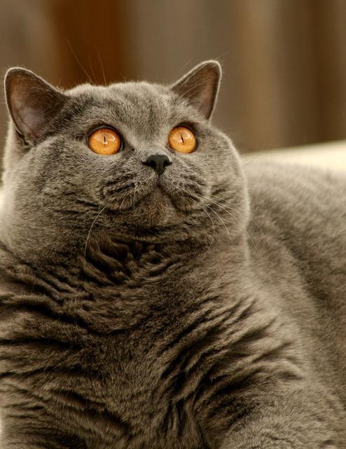 cat-2886_640.jpg