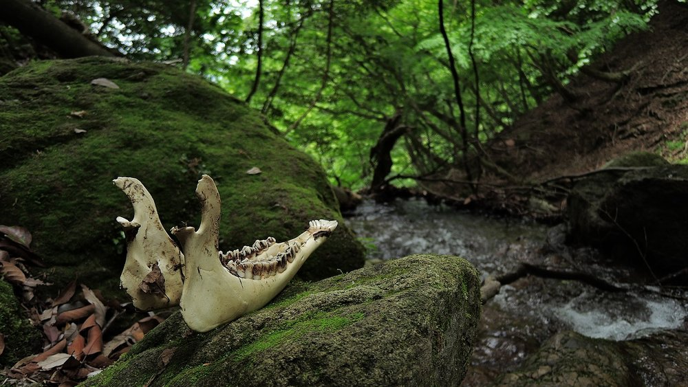 Article: Harvesting Animal Bones From The Woods:is it illegal and what to do if you've already got something Collecting bones in the woods? me too! There is literally nothing I love more, but while there is normal a 'don't ask, don't tell policy' among the hiking and spiritual communities regarding treasures found whilst out and about, collecting bones is actually against the law in many states. That is, without a hunting or educational permit . .