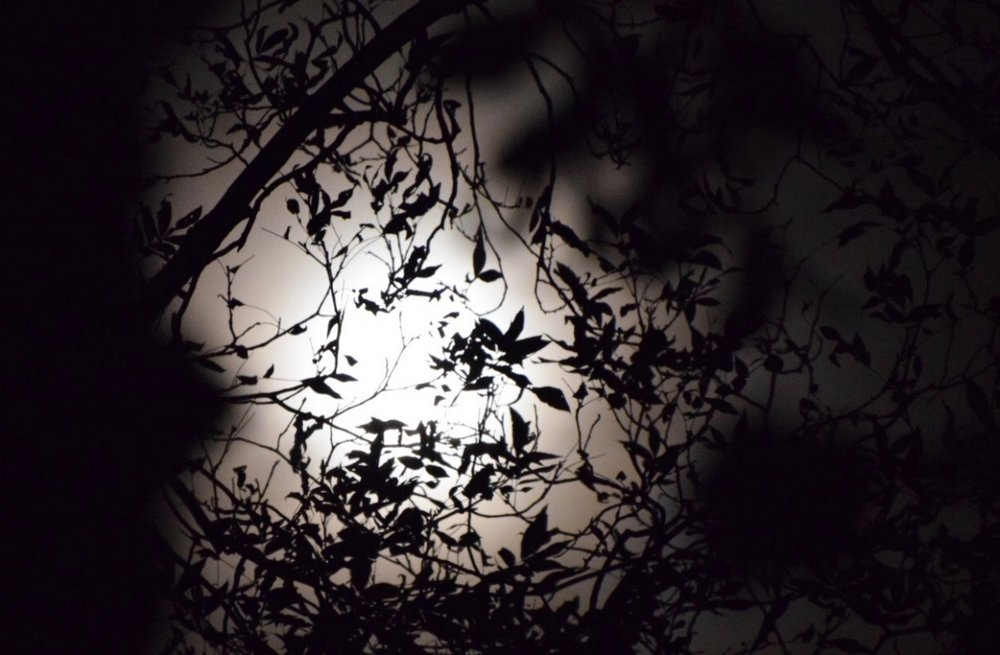 moon-through-the-trees-amanda-meder