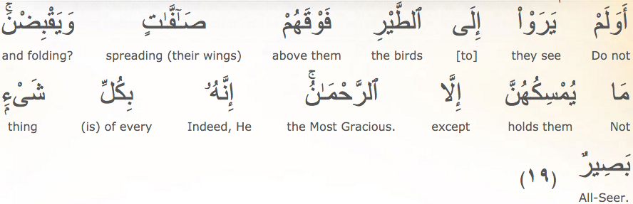 Do they not see the birds above them with wings outspread and (sometimes) folded in? None holds them (upward) except the Most Merciful. Indeed He is, of all things, Seeing. Al-Mulk: 19