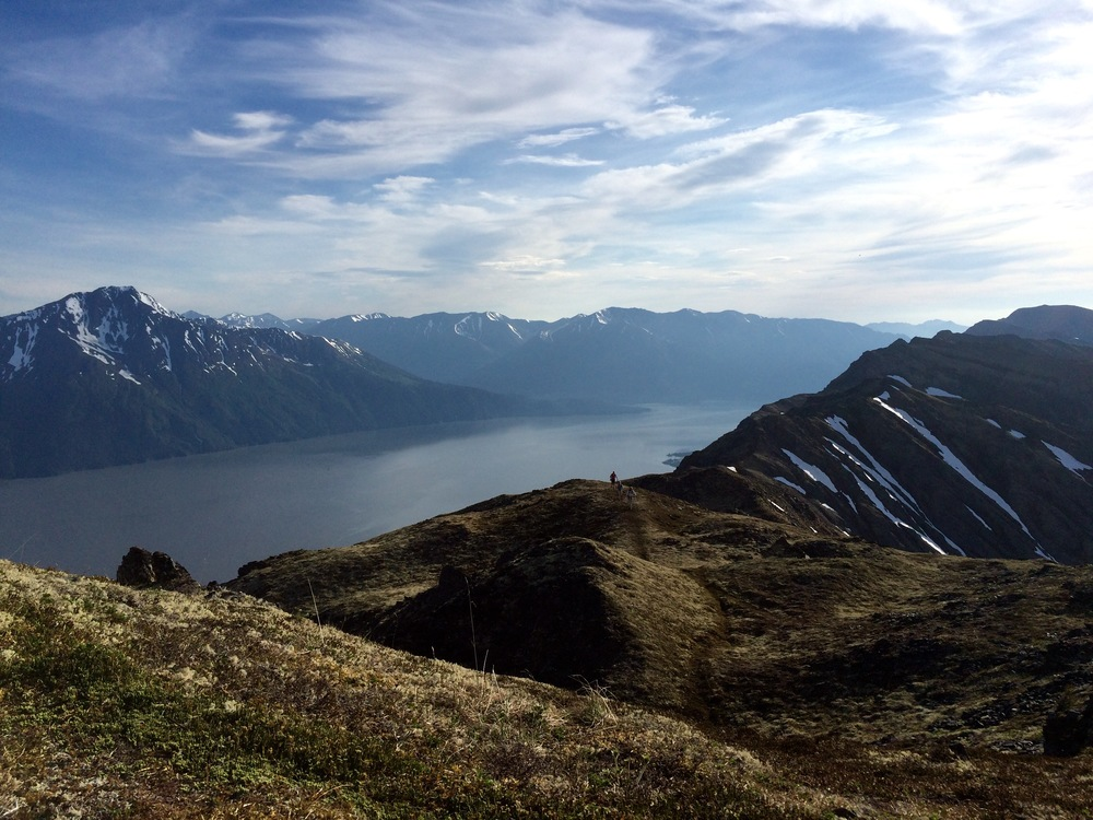 Looking back the ridge toward Turnagain Arm. Photo by K. Strong.