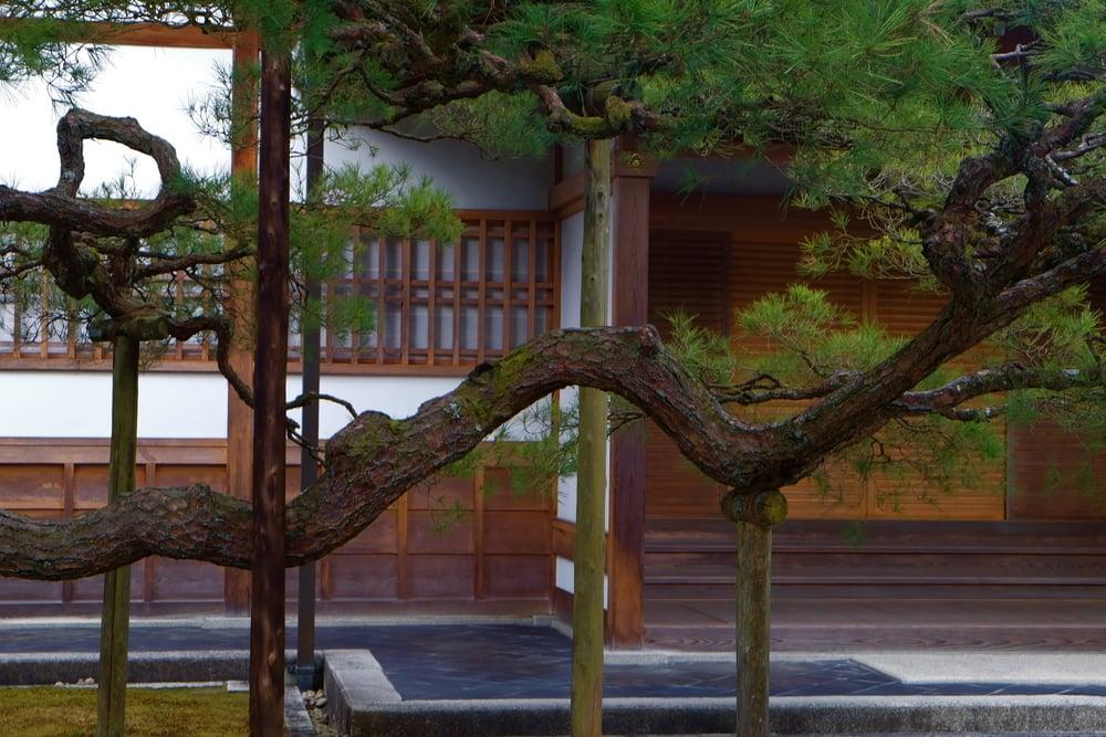 Tree assist, Kyoto.