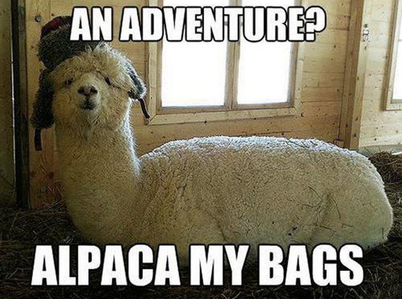 alpacamybags.jpg