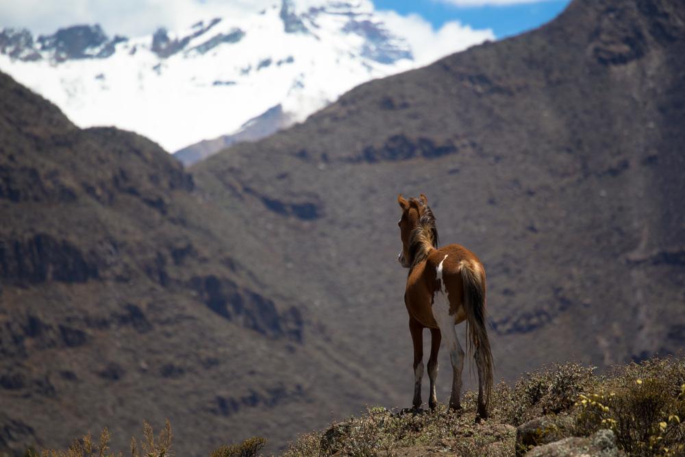 Horse, pondering freedom?
