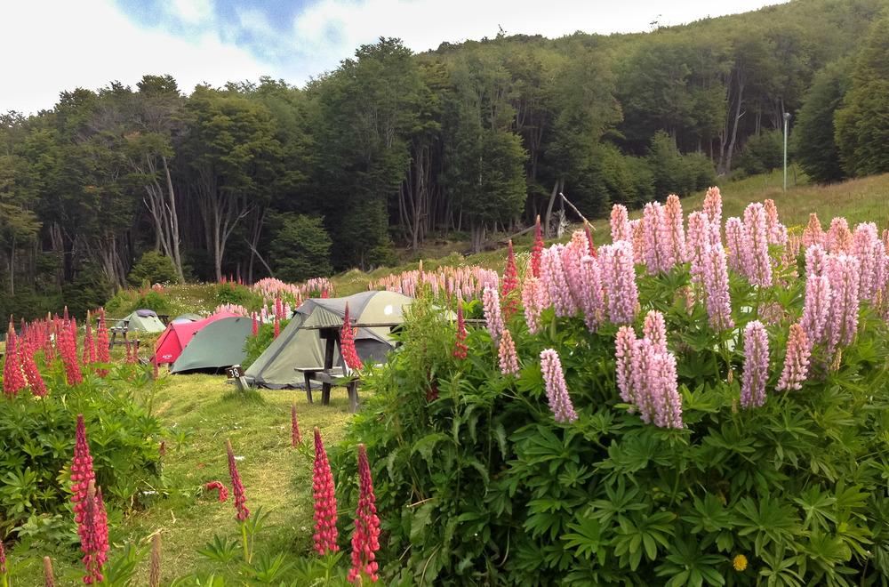 Our beautiful campsite at Camping La Pista del Andino.