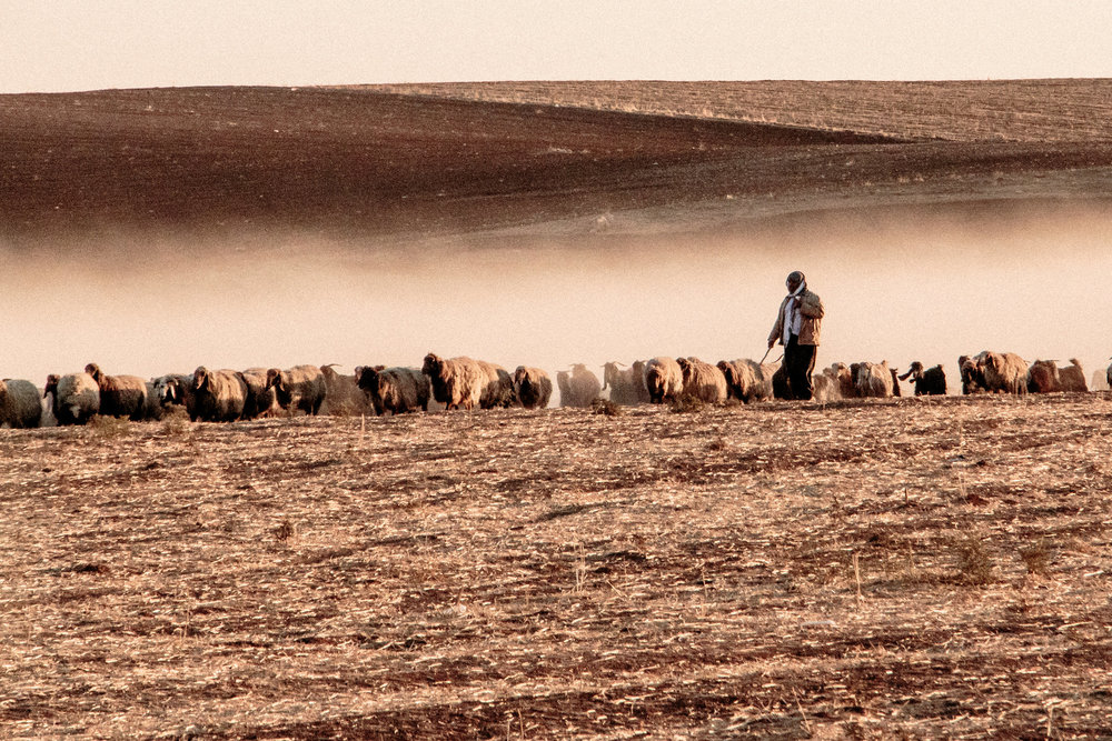 Shepherd at sunset near Camp Kabarto, Kurdistan Region of Iraq