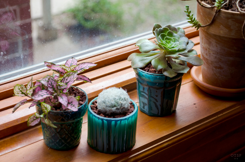 Windowsill Series : Tealight Plant Trio DIY, Windowsill plants