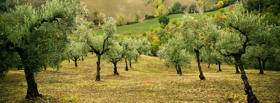 Nudo-Italia Adopt a Tree