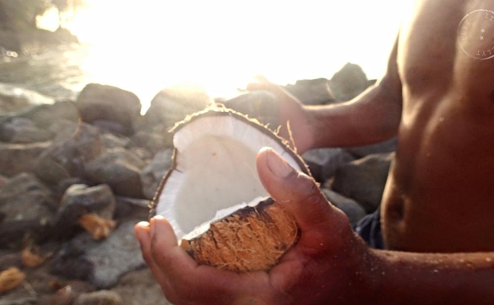 Harvesting coconuts in Anguilla