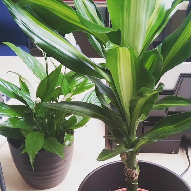 Plants in the new Sookio office