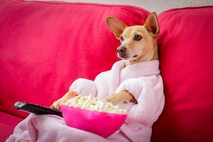 dog watching tv.jpg
