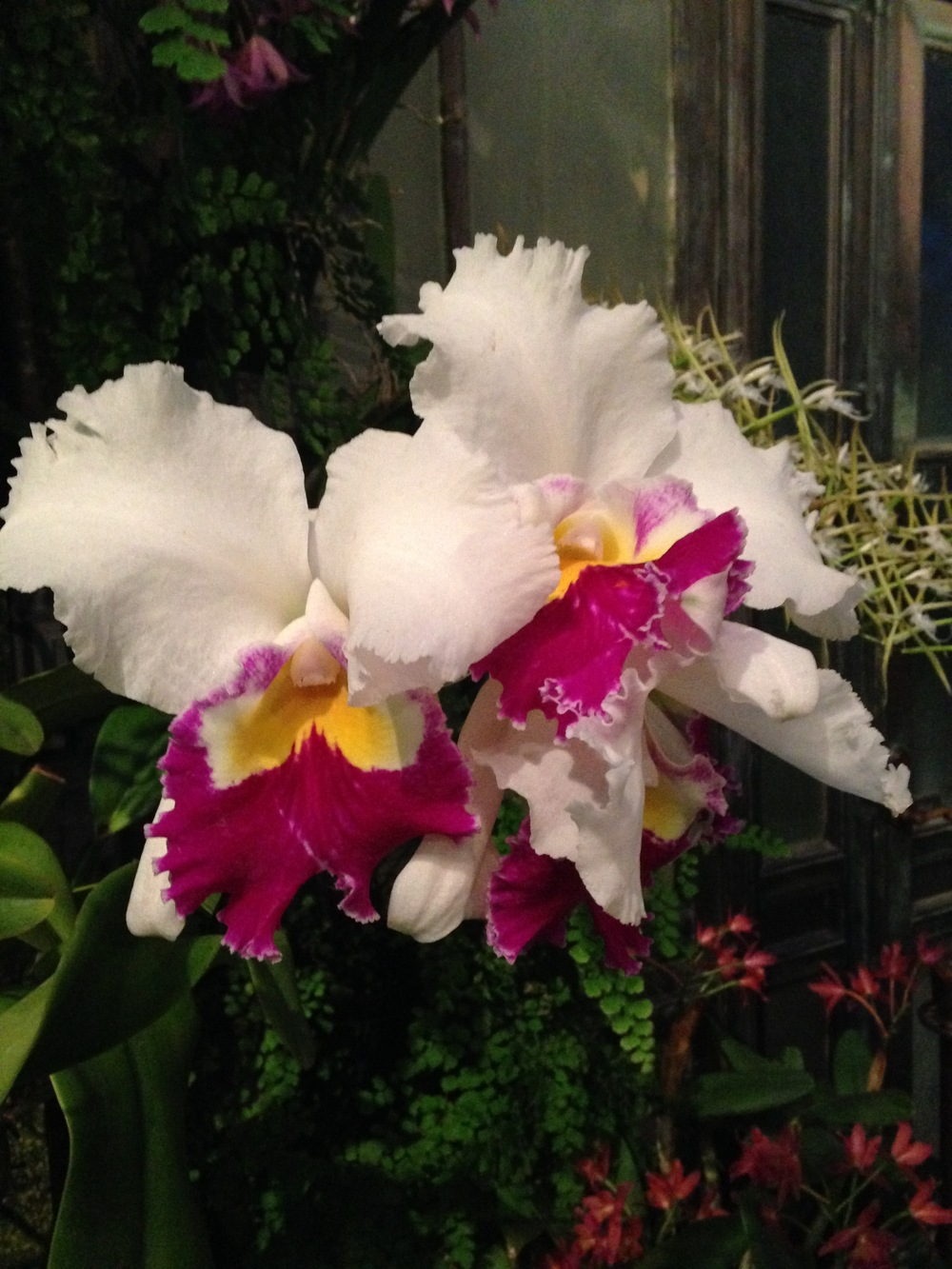 Orchids in full bloom, in the middle of winter.