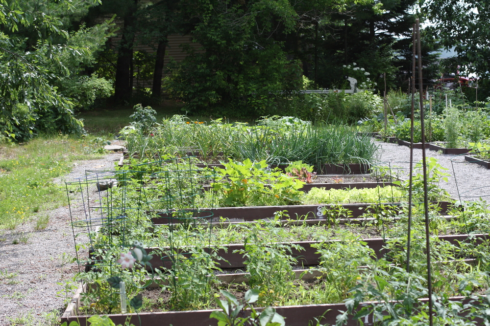 Check out our fine Community Garden -- situated between the Glens Falls National Bank and the Higher Grounds Coffee Shop.