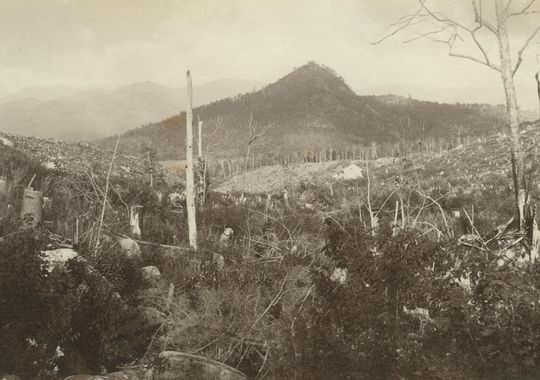 Logging And Mining Almost Devastated The Adirondacks In The 1800's.(Photo: Adirondack Museum)