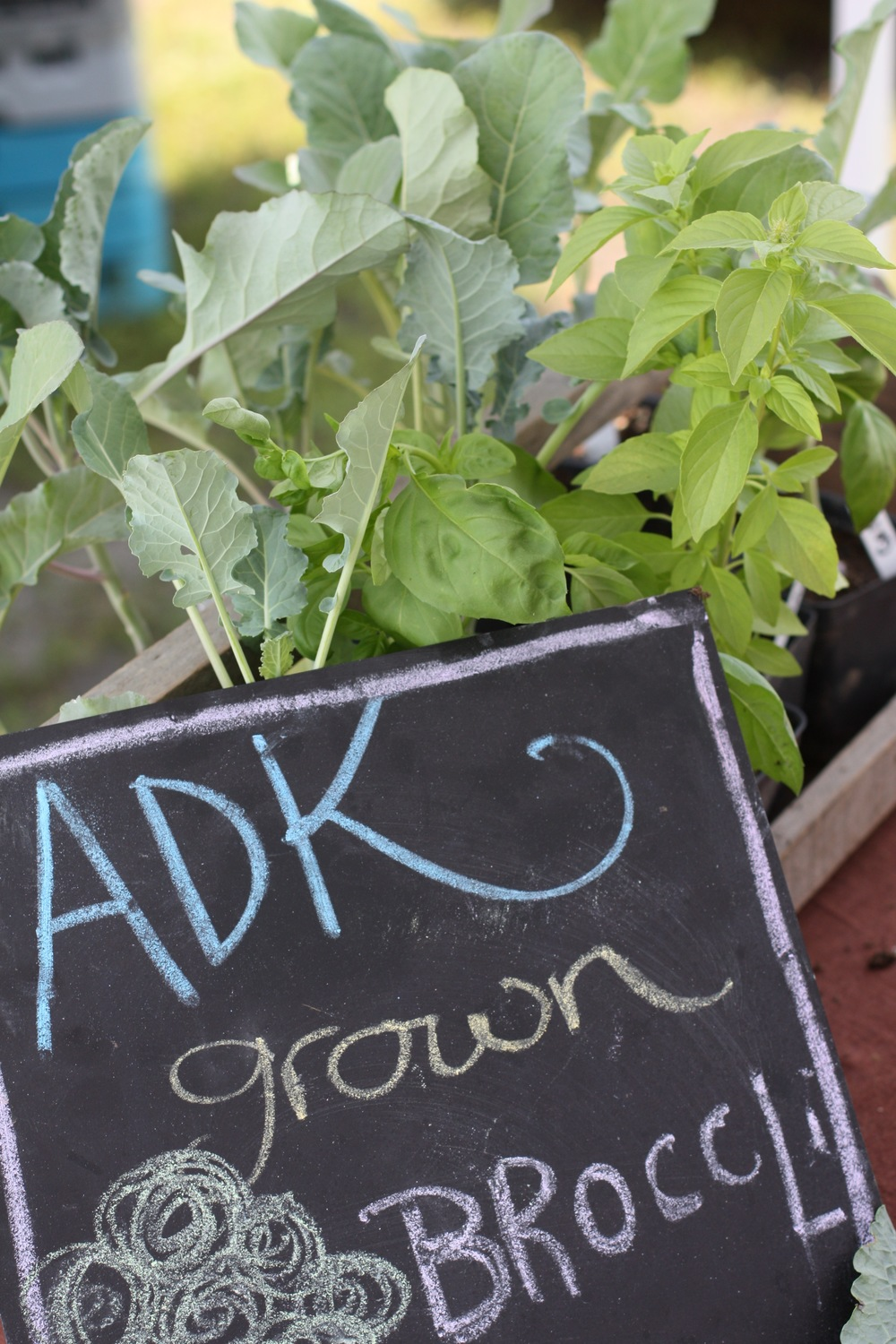 Schroon's Monday Farmer's Market 2015. From the Schroon Laker Collection. All Rights Reserved.