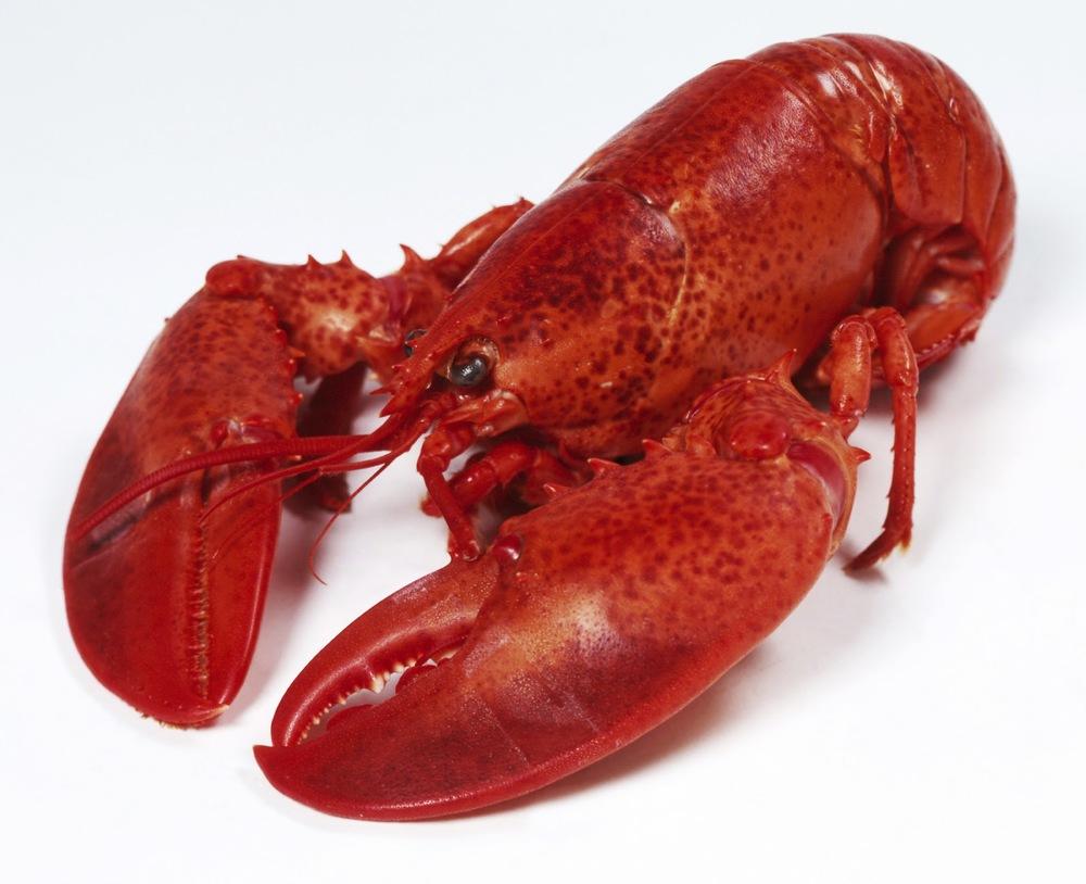 Lobster-for-Menulobbies.jpg