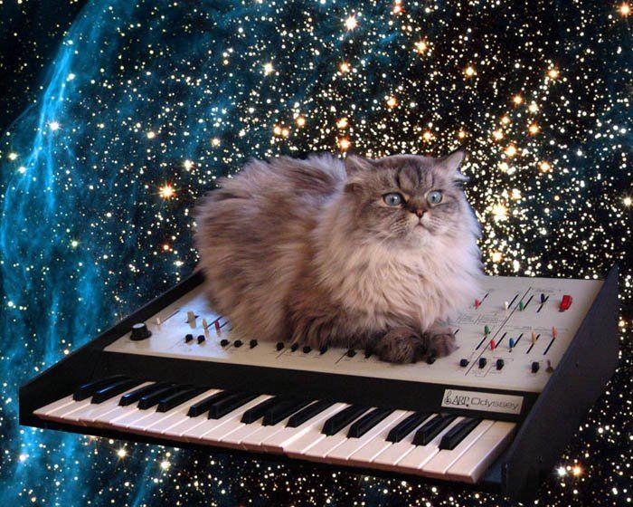Photo Credit: Big Time Kitty