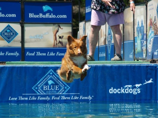 Dock Dogs in Action