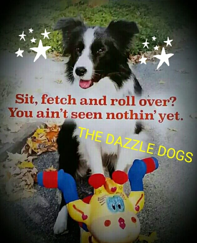 """""""The Dazzle Dogs!""""Presented by the Library's ROCK! Summer Reading Program. Two shows, 11:00 a.m. and 1:00 p.m., Schroon Lake Public Library."""