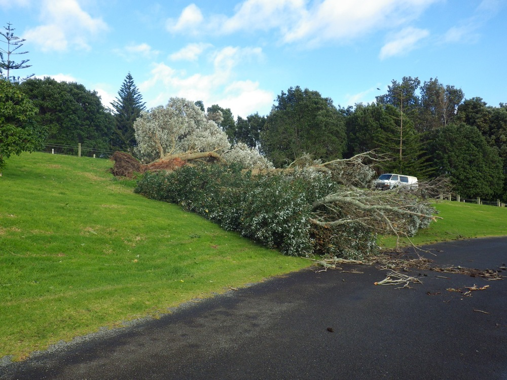 Tree carnage from the windstorm, only one of many!