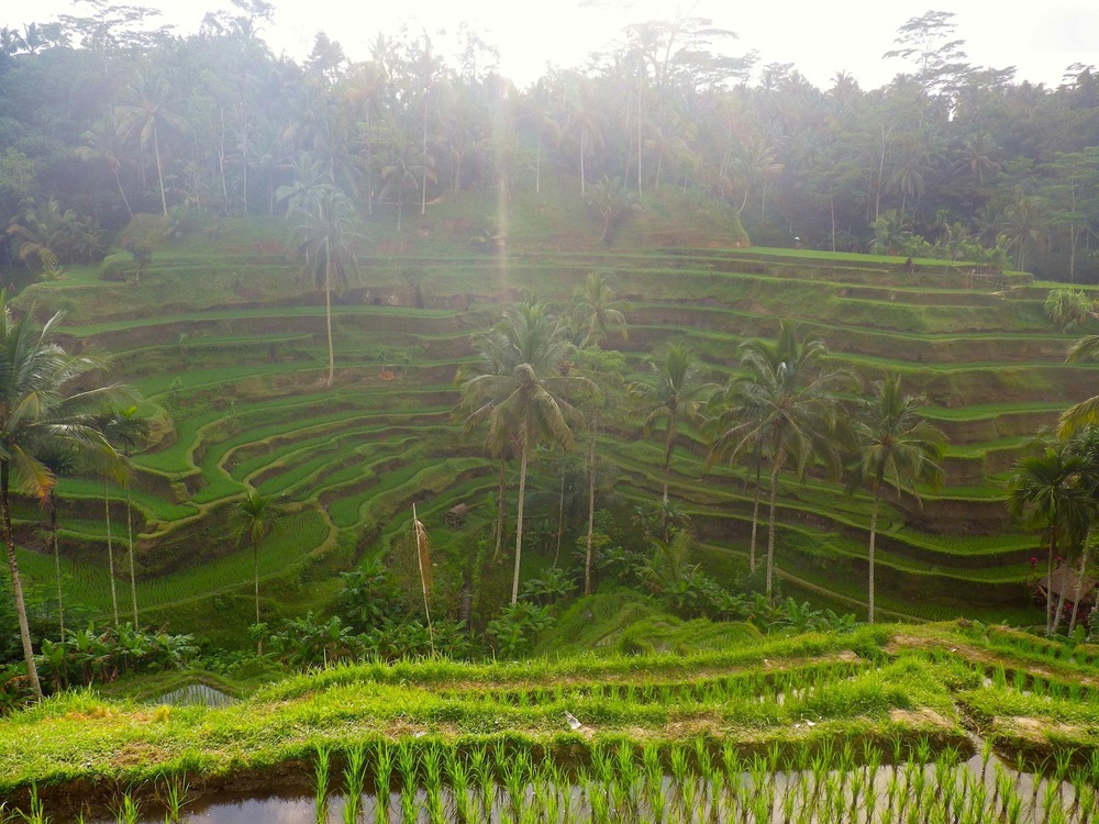 Incredible Rice Terrace