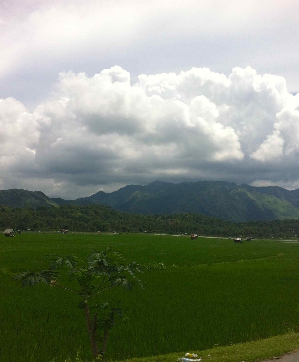 Mountains Over the Rice Fields