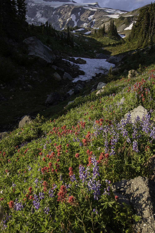 Rainier flowers