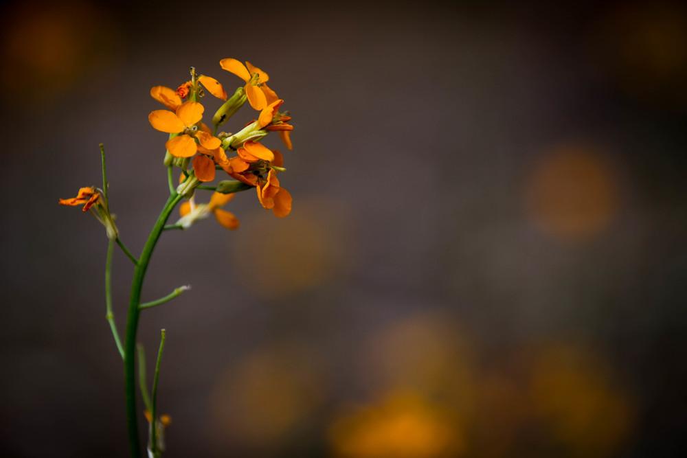 Orange flower #5