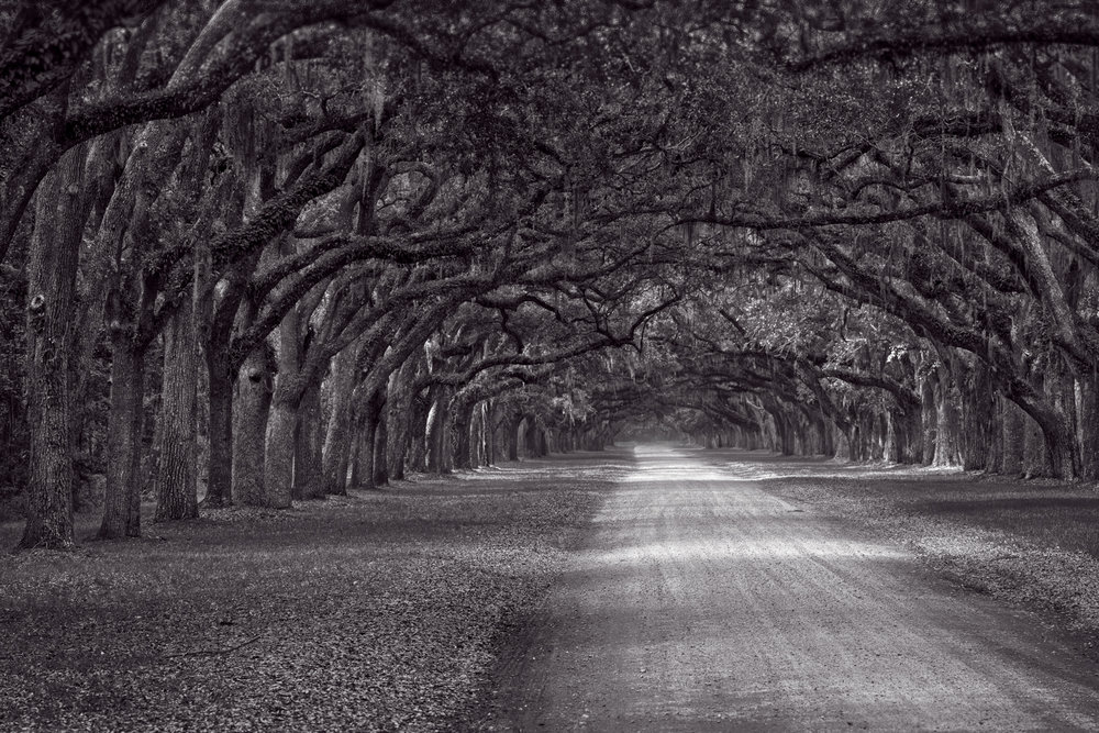 Through the woods  Another classic monochrome, this one is at Wormsloe State Historic site near Savannah, Georgia. It's a classic location, with wonderful textures and a ton of history hidden behind those amazing trees.