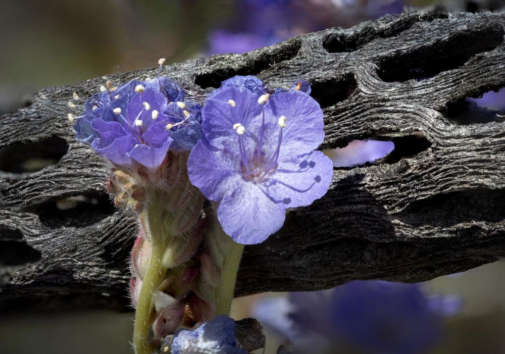 Flowers Amid the Skeleton